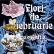 Expoziţia Flori de februarie