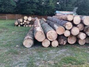 Acţiuni de control în domeniul exploatării, transportului, depozitării și prelucrării masei lemnoase