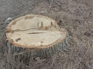S-a ales cu amendă şi cu marfa şi camionul confiscat, pentru că transporta lemn fără a avea acte în regulă