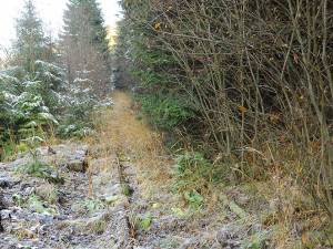 Linia de evitare din aval de staţia Valea Putnei, astăzi dezafectată