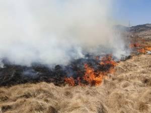 Peste 60 de oameni au muncit să oprească un incendiu extins, care amenința pădurea