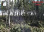 Într-un ocol silvic privat