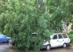 Copac căzut peste maşini, în spatele magazinului Bucovina