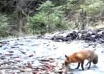 Fauna Bucovinei